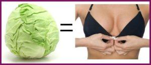 Капуста для увеличения груди