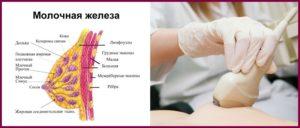 На какой день цикла делать узи грудных желез?
