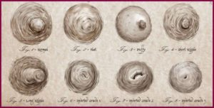 Разновидности женских сосков
