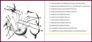 Схема аксиллярных лимфоузлов в молочной железе