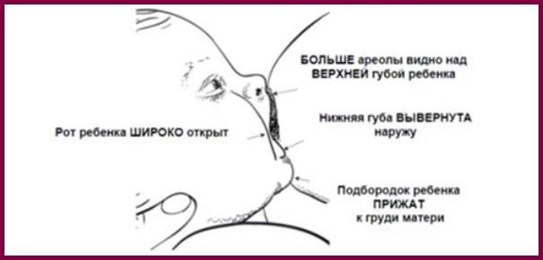Признаки правильного прикладывания к груди
